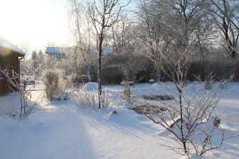 vinter_i_tradgardsdammen_vattenliv_01