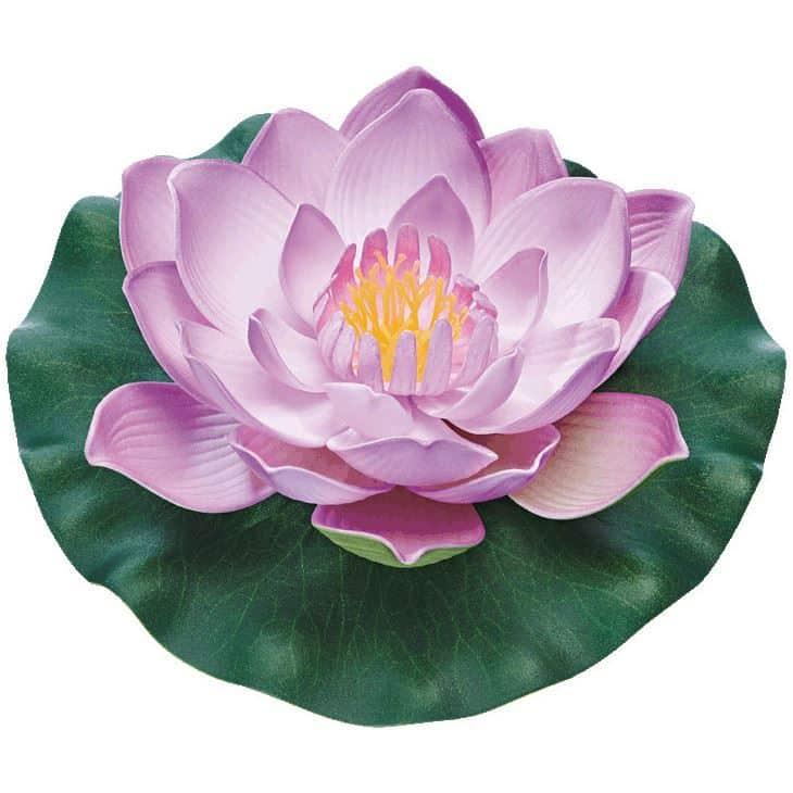 PondoLily lila
