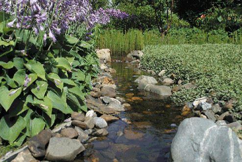 Bäck, miljöbild