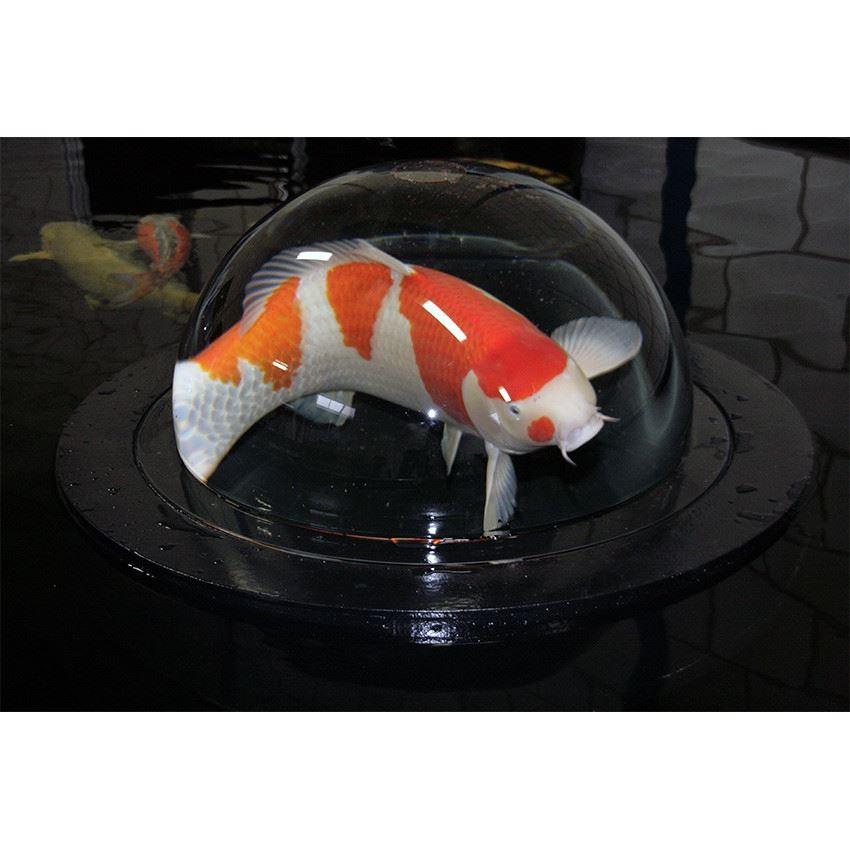 Fiskglob