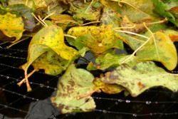 Löv och skräp på ytan