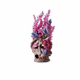 Korallrev Rödrosa