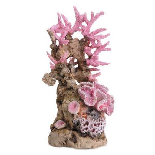 Korallrev rosa