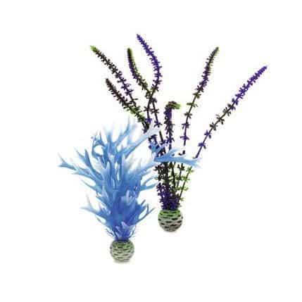 Plantset M, blå och lila