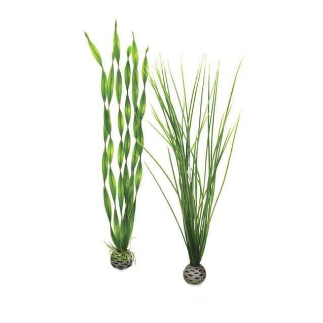 Plantset L