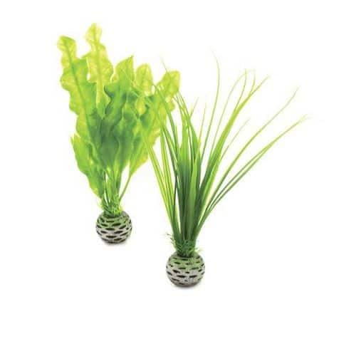 Plantset S