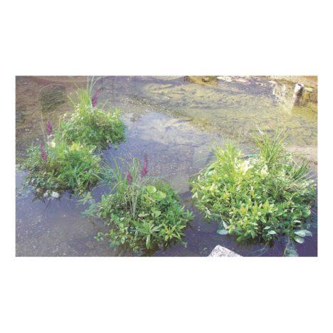 Planteringsö, miljöbild