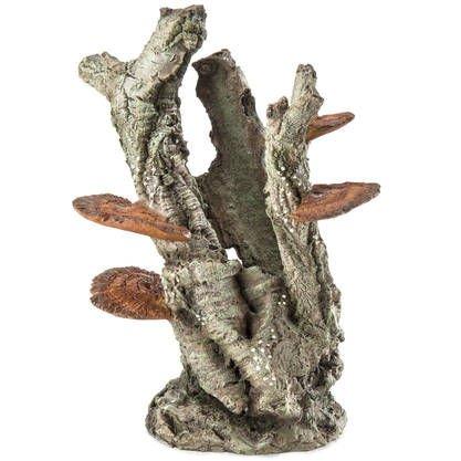 Bark med svamp