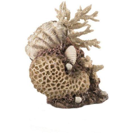 Korall, musslor och natur