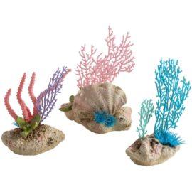 Korall och snäckor på sten, set