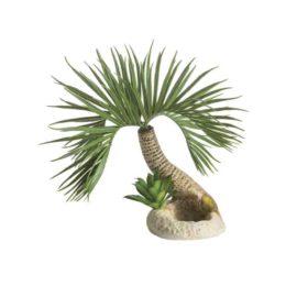 Palmträd S, Seychellerna